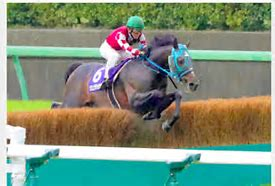 Oju Chusan wins his fifth Nakayama Grand Jump